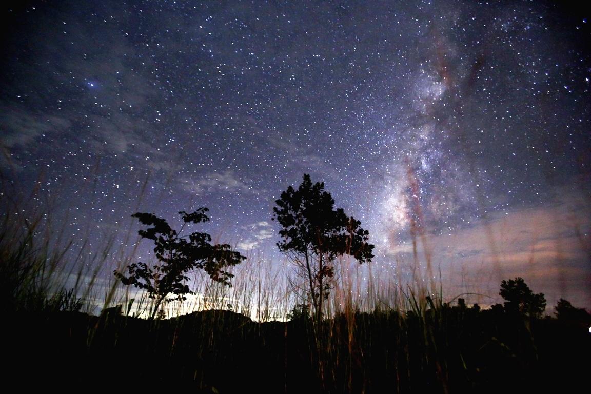 ночь в августе картинки представляли